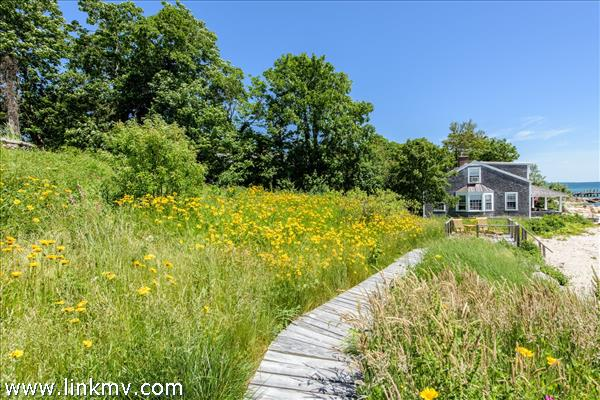 Walkway surrounded by wildflowers